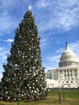 Capitol Tree 1
