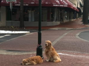 Cute (and well-behaved dogs) waiting for their owners to come out of a coffee shop.  I had to snap their photo before starting my run.
