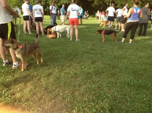 Lost Dog 5K August 2013 3