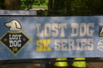 Lost Dog 33