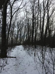 02.2 Snowy trail